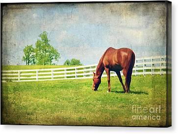 Kentucky Horse Park Canvas Print - Grazing by Darren Fisher