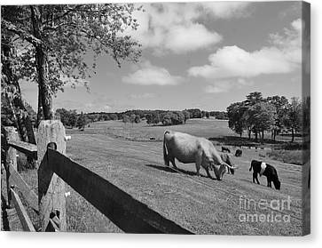 Grazing The Day Away Canvas Print
