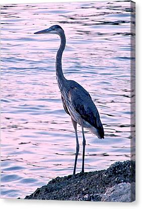 Canvas Print featuring the photograph Great Blue Heron by Brian Wright