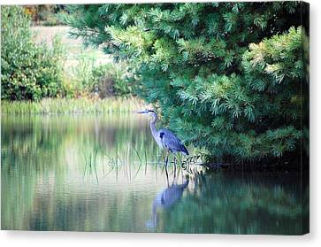 Great Blue Heron In Pines Canvas Print by Mary McAvoy