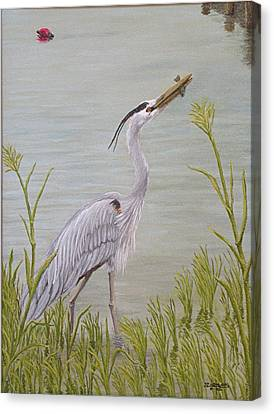 Great Blue Heron Canvas Print by Jim Ziemer