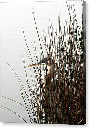 Canvas Print featuring the photograph Great Blue Heron by Kay Lovingood