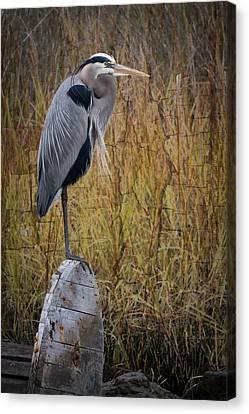Great Blue Heron On Spool Canvas Print by Debra and Dave Vanderlaan