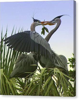 Great Blue Herons Canvas Print by Myrna Bradshaw