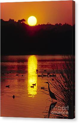 Canvas Print featuring the photograph Great Egret - Santa Barbara Bird Refuge by Craig Lovell