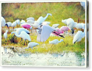 Canvas Print featuring the photograph Great Egret Flying by Dan Friend