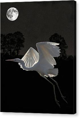 Great Egret In Flight Canvas Print by Eric Kempson