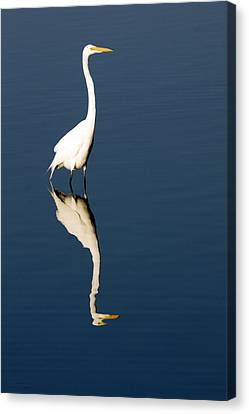 Great Egret Reflected Canvas Print by Sally Weigand