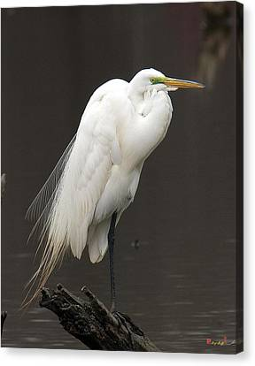 Canvas Print featuring the photograph Great Egret Resting Dmsb0036 by Gerry Gantt