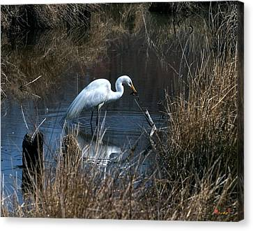 Canvas Print featuring the photograph Great Egret With Fish Dmsb0034 by Gerry Gantt