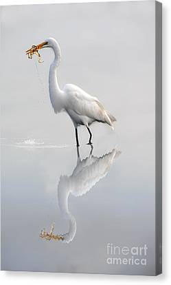 Canvas Print featuring the photograph Great Egret With Lunch by Dan Friend