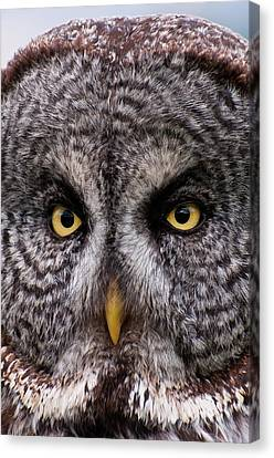 Great Gray Owl Canvas Print by Chad Graham