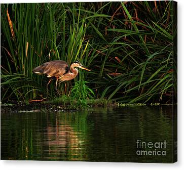 Canvas Print featuring the photograph Great Heron by Deborah Smith