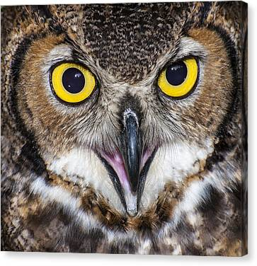 Great Horned Owl Close Up Canvas Print by Ray Downs