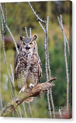Great Horned Owl Canvas Print by Donna Greene