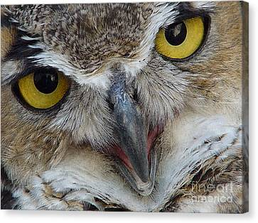 Great Horned Owl Canvas Print by Janeen Wassink Searles