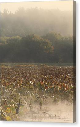 Great Meadows National Wildlife Refuge Blue Heron Fog Canvas Print by John Burk