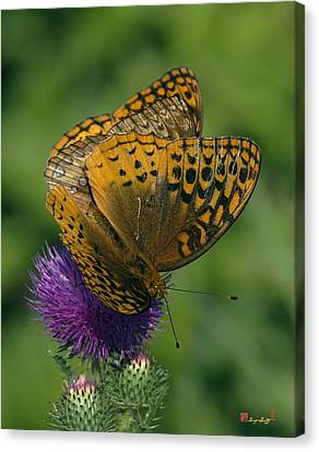 Great Spangled Fritillaries On Thistle Din108 Canvas Print by Gerry Gantt