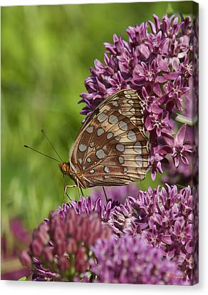Great Spangled Fritillary Din194 Canvas Print by Gerry Gantt