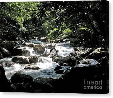 Great Stream Great Smokeys Canvas Print by Don F  Bradford