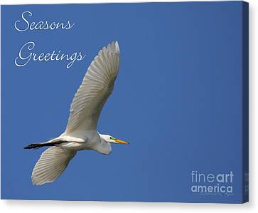 Great White Egret Holiday Card Canvas Print by Sabrina L Ryan