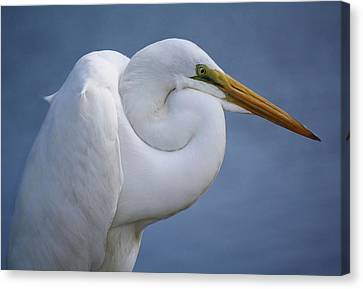 Great White Egret Canvas Print by Paulette Thomas