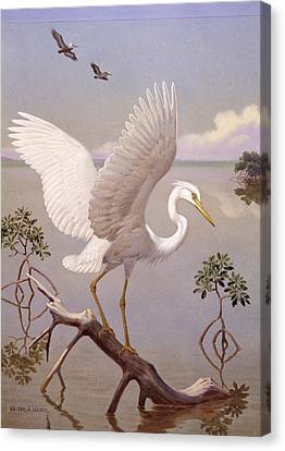 Great White Heron, White Morph Of Great Canvas Print by Walter A. Weber