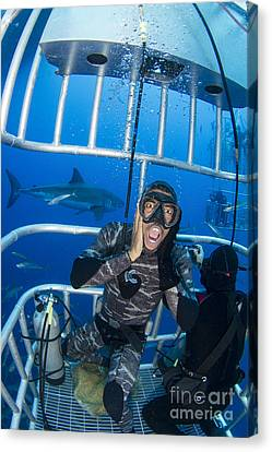 Cage Diving Canvas Print - Great White Shark Behind Frightened by Todd Winner