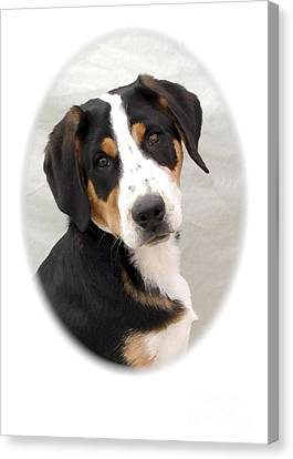 Greater Swiss Mountain Dog 1255 Canvas Print by Larry Matthews