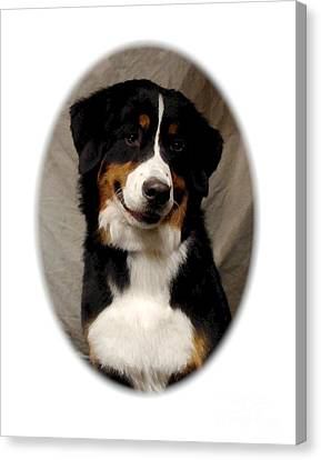 Greater Swiss Mountain Dog 274 Canvas Print by Larry Matthews