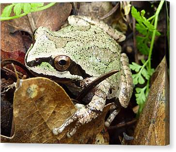 Canvas Print featuring the photograph Green And Brown Frog by Cindy Wright