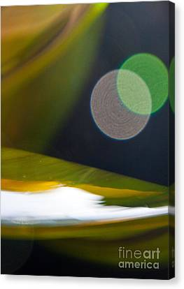 Green And Gold Abstract Canvas Print by Dana Kern