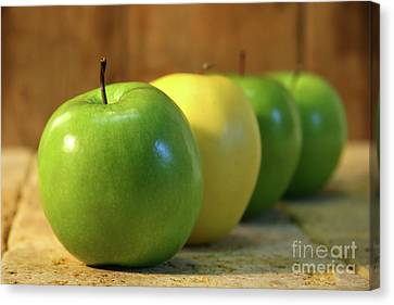Green And Yellow Apples Canvas Print by Sandra Cunningham