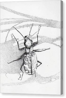 Green Andyellow Beetle Canvas Print