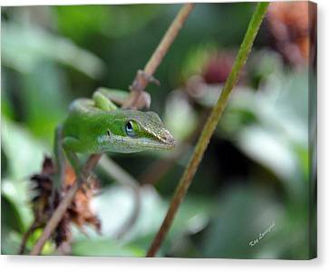 Canvas Print featuring the photograph Green Anole by Kay Lovingood