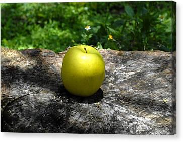 Green Apple Canvas Print by David Lee Thompson