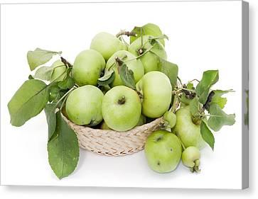 Green Apples In Basket Canvas Print by Aleksandr Volkov