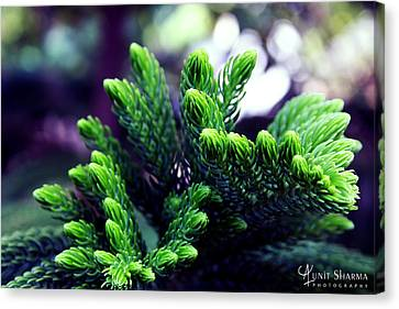 Canvas Print - Green by Aunit Sharma