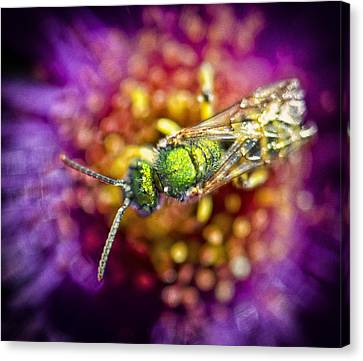 Green Bee Canvas Print by Vicki Jauron