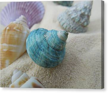 Green-blue Shell In The Sand Canvas Print by Chad and Stacey Hall