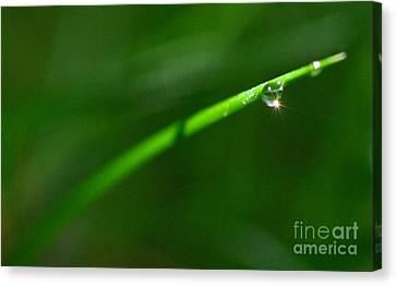 Green Drops Canvas Print