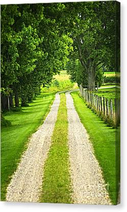 Rural Landscapes Canvas Print - Green Farm Road by Elena Elisseeva