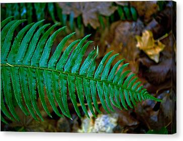 Canvas Print featuring the photograph Green Fern by Tikvah's Hope