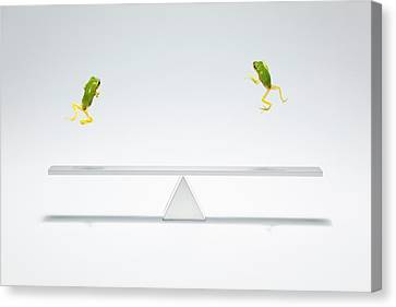 Green Frog Flying Over The  Seesaw Canvas Print