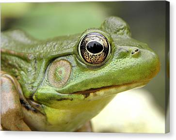 Green Frog Canvas Print by Griffin Harris