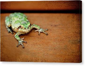 Frog Canvas Print - Green Frog With Gold Rimmed Black Eyes by R. Nelson