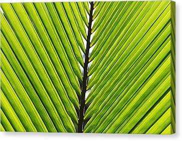 Green Fronds Canvas Print by Lauri Novak