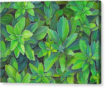 Green Gold Canvas Print by Yvonne Scott