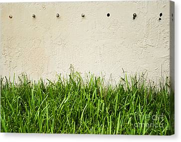 Green Grass Against Wall Canvas Print