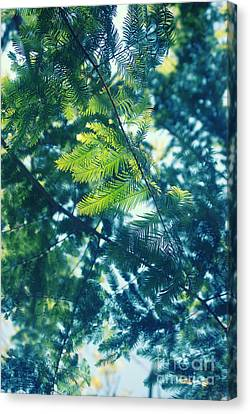 Abstract Nature Canvas Print - Green by HD Connelly